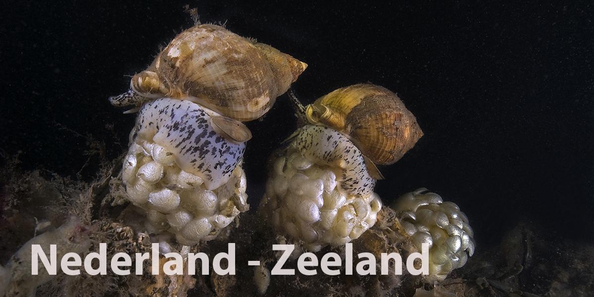 Oosterschelde-Zeeland-Edwin-van-der-Sande