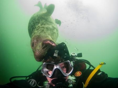 Oppassen voor zeehondsdolheid!
