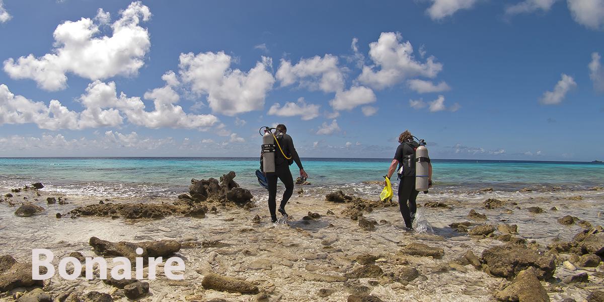 Kantduiken-Bonaire