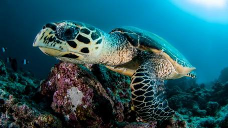 Malediven: Eten, slapen en duiken…