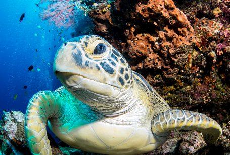 Passport to Paradise – Eerste stop: Manado